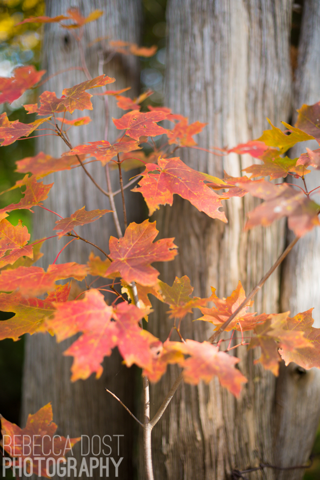 Rebecca Dost Photography: Autumn